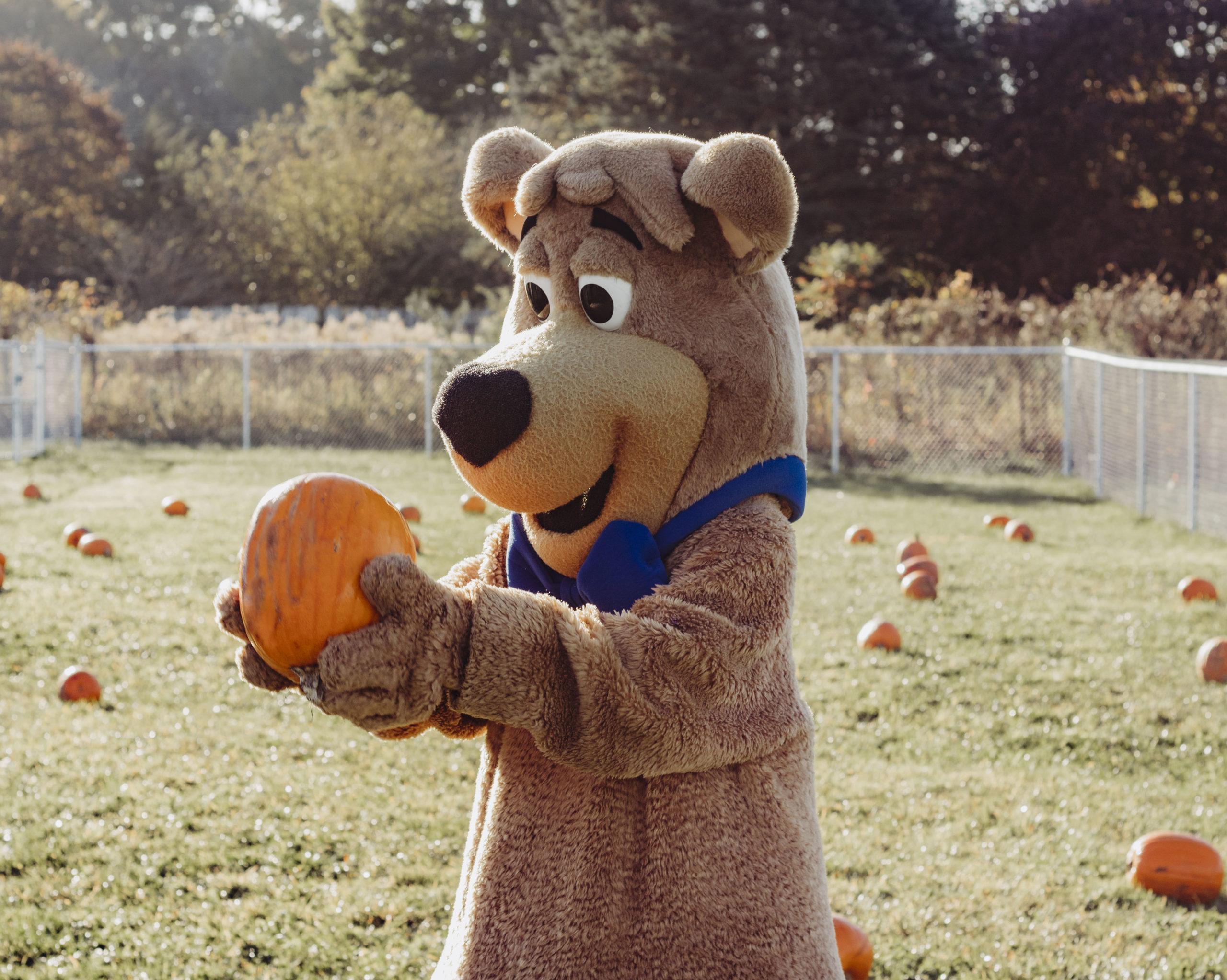 Boo Boo Pumpkins