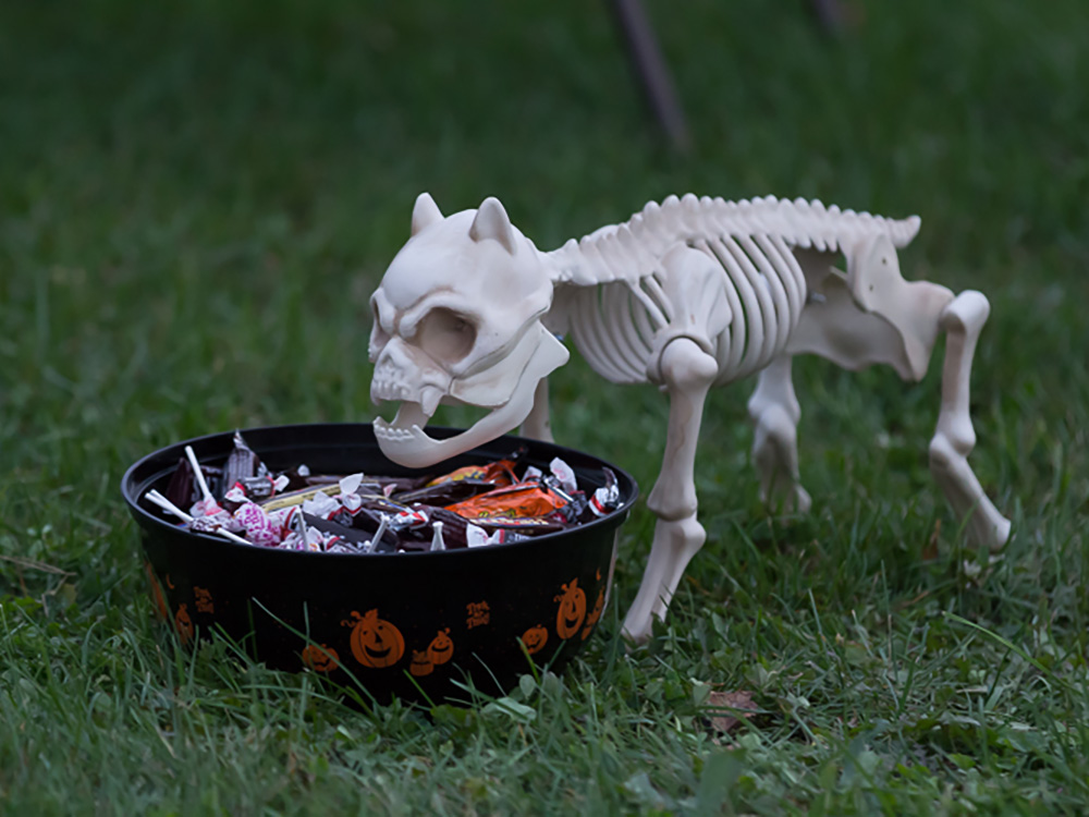 Halloween Dog Of Bones